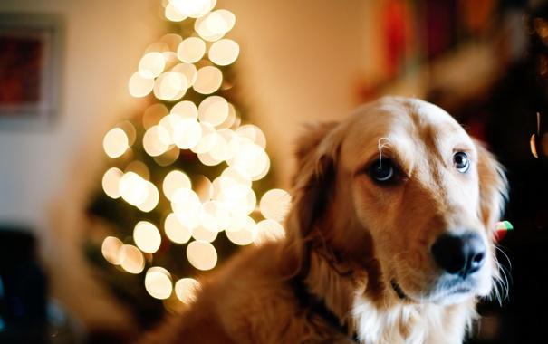 Фото обои друг, праздник, собака
