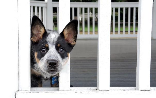 Фото обои друг, забор, собака