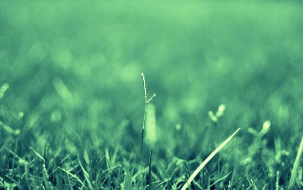 Фото обои зелень, трава, капли, макро, природа, роса, растения
