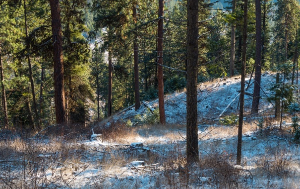 Фото обои зима, лес, снег, сосны, сша, штат вашингтон