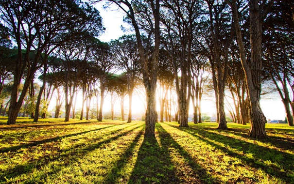 Фото обои свет, деревья, тени