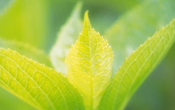 Фото обои лето, лист, зеленые, листочки