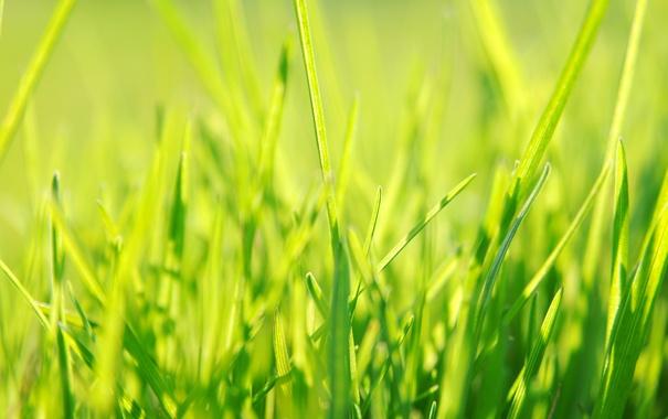 Фото обои трава, зеленый, весна