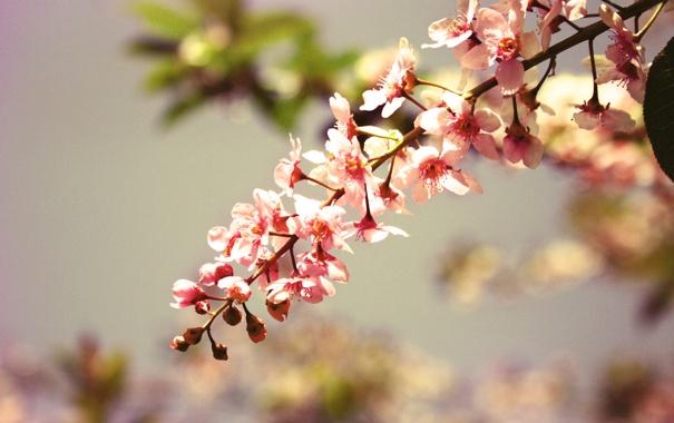 Фото обои цветы, природа, дерево, ветка, лепестки, nature, flowers