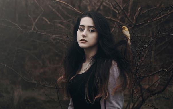 Фото обои лес, девушка, птичка, cansu ozkaraca
