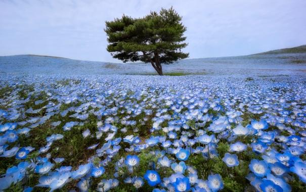 Фото обои поле, цветы, дерево, весна