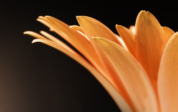 Фото обои макро, цветы, фото, лепестки