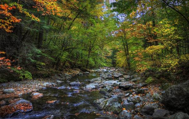 Фото обои осень, лес, деревья, река, камни