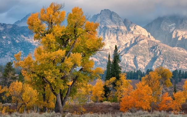 Фото обои осень, деревья, горы, США, штат Вайоминг, национальный парк Гранд-Титон