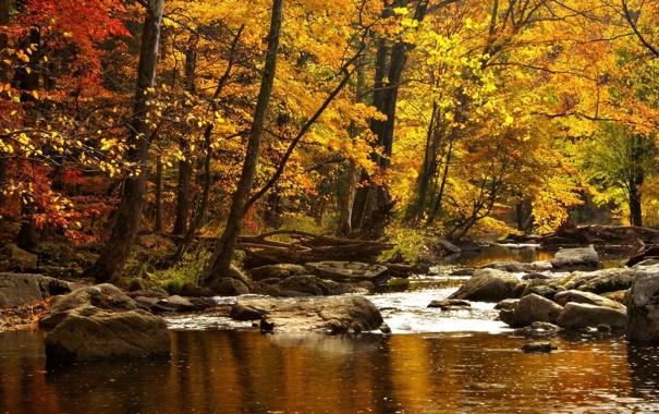 Фото обои осень, вода, деревья, горы, природа, река, камни