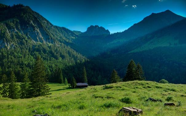 Фото обои зелень, лес, небо, трава, деревья, горы, природа