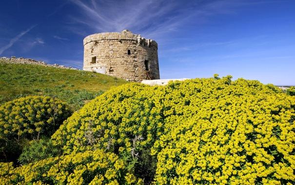Фото обои цветы, башня, холм, испания