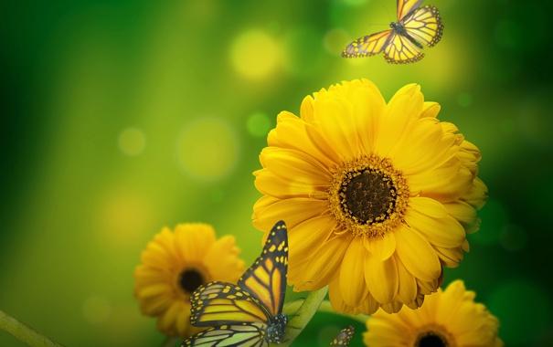 Фото обои бабочки, цветы, блики, желтые, зеленый фон