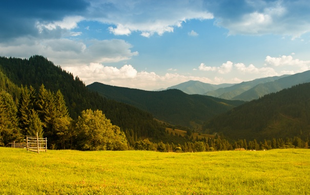 Фото обои зелень, лес, небо, трава, облака, свет, деревья