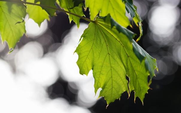 Фото обои макро, лист, зеленый, прожилки