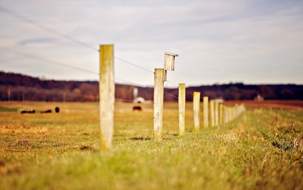 Фото обои зелень, трава, природа, фон, обои, забор, размытие