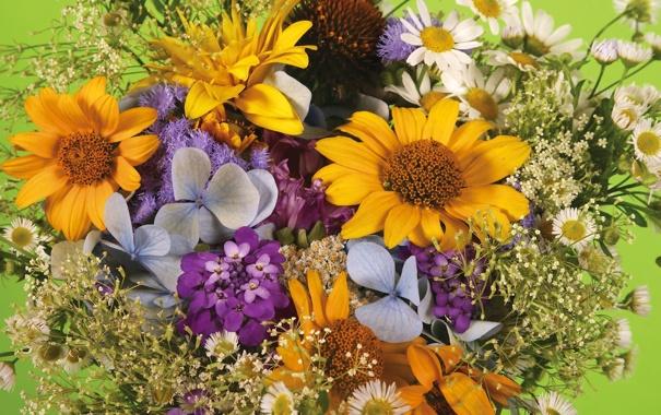 Фото обои цветы, букет, растения