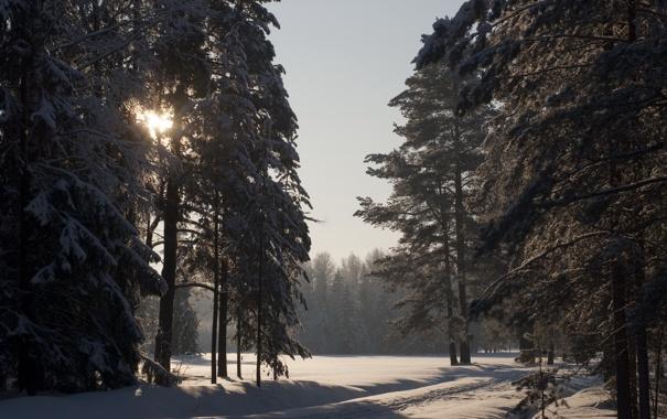 Фото обои зима, солнце, снег, павловск