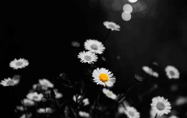 Фото обои цвет, ромашки, One in a Million