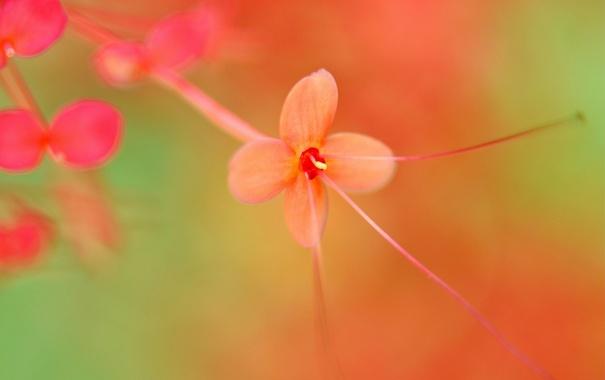Фото обои цветок, листья, фон, цвет, красные