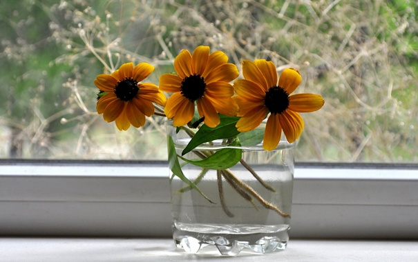 Фото обои макро, цветы, фото, картинки, растения, окно, натюрморт