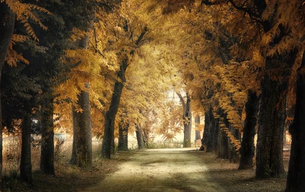 Фото обои осень, город, парк