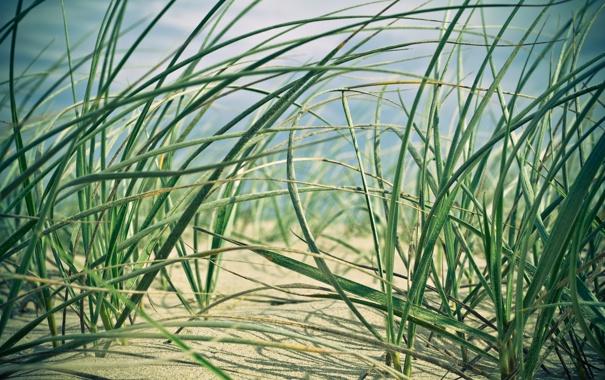 Фото обои песок, трава, макро, природа, ростки, nature, macro
