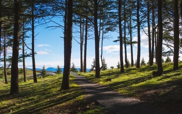 Фото обои зелень, лес, лето, трава, деревья, парк