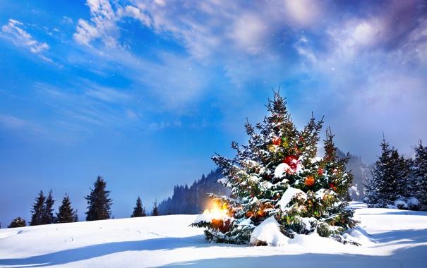 Фото обои лед, небо, свет, снег, lights, елка, Новый год