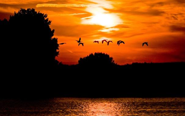 Фото обои небо, облака, деревья, закат, птицы, озеро