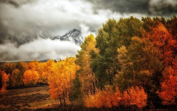 Фото обои деревья, пейзаж, горы