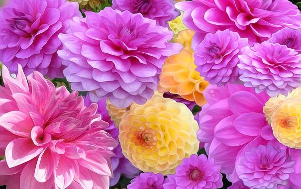 Фото обои линии, рендеринг, краски, лепестки, сад, бутон