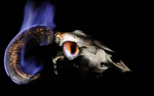Фото обои фон, пламя, череп, рога