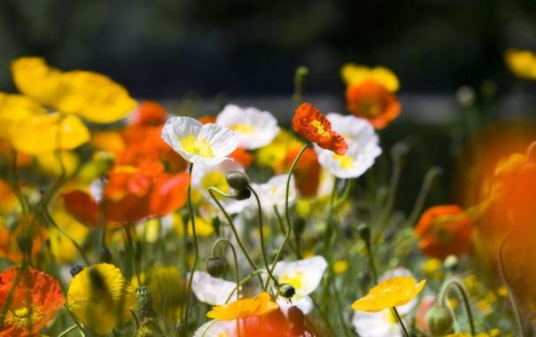 Фото обои белый, лето, макро, цветы, оранжевый, желтый, природа