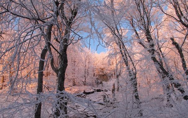 Фото обои зима, иней, лес, снег, деревья, ветки, природа