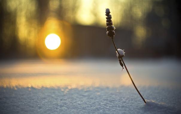 Фото обои зима, солнце, свет, снег, блики, веточка, фон