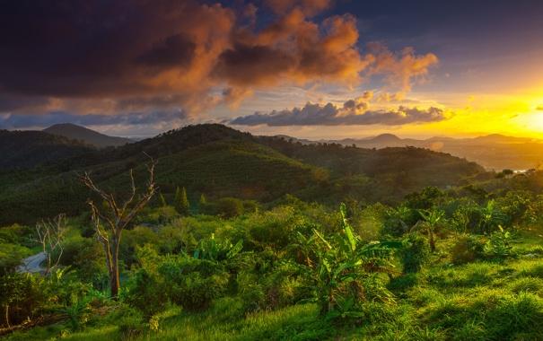 Фото обои trees, cloud, hills, sunrise, thailand