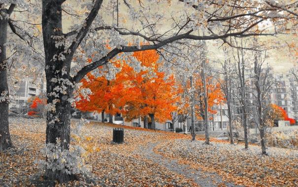 Фото обои деревья, город, улица, дома