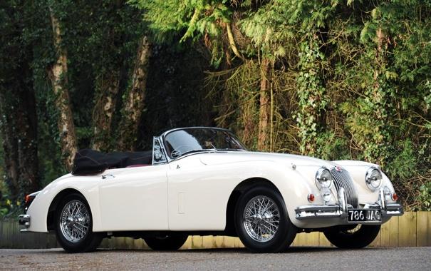 Фото обои белый, деревья, фон, Jaguar, Ягуар, кабриолет, кусты
