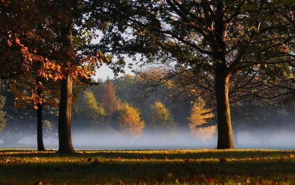 Фото обои трава, листья, деревья, туман