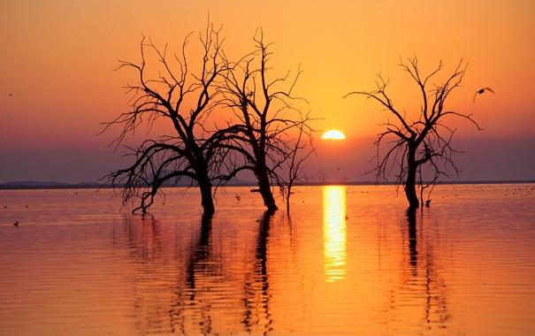 Фото обои закат, пейзаж, водоём, деревья, солнце, природа, река