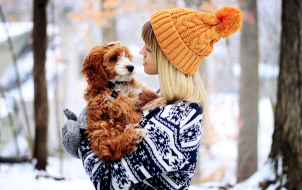Фото обои зима, девушка, животное, шапка, собака