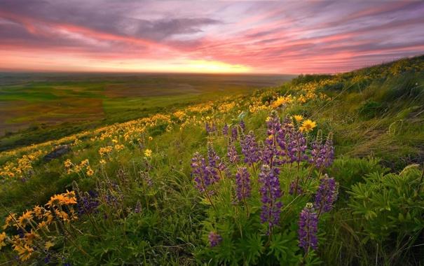 Фото обои поле, цветы, природа, фото, красота, весна