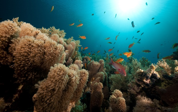 Фото обои рыбы, водоросли, природа, морское дно, солнечные лучи, fish, algae