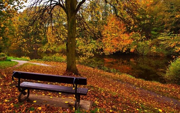 Фото обои осень, парк, скамья