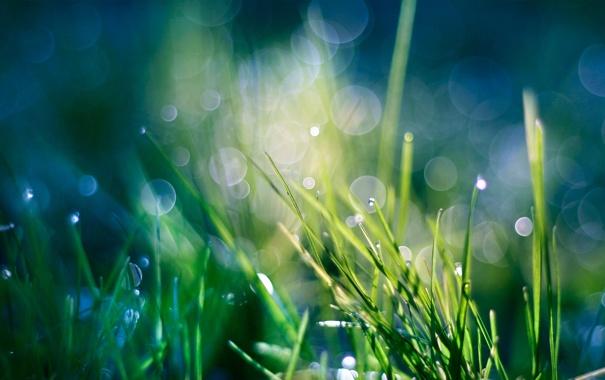Фото обои травка, капли, роса, растения, зелень, макро