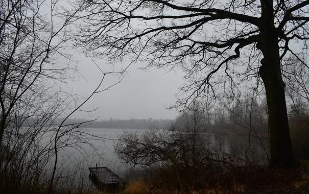 Фото обои осень, лес, туман, озеро