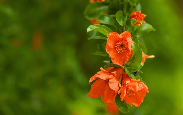 Фото обои зелень, листья, макро, цветы, растение, ветка, размытость