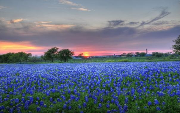 Фото обои трава, солнце, цветы, тучи, природа, луг, grass