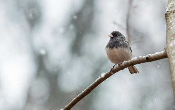 Фото обои природа, дерево, птица
